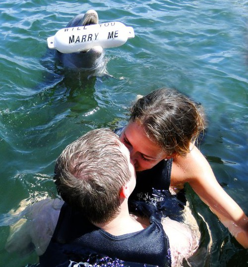 This dolphin just proposed Funny People Image