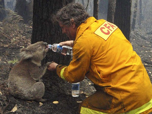 This is from a few years back during some pretty severe bushfires Funny Animal Image