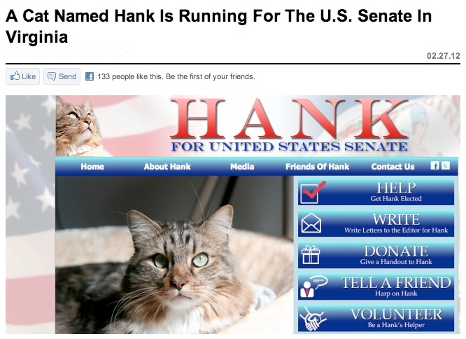 A cat named Hank is running for senate in Virginia. Funny Cat Picture