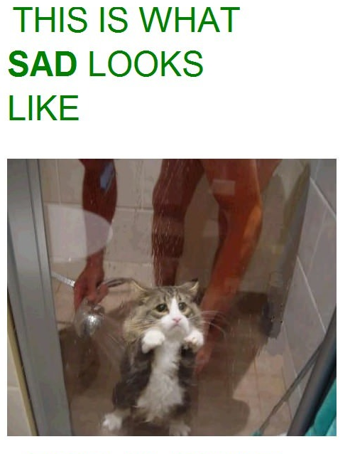 This is what sad looks like Funny Cat Picture
