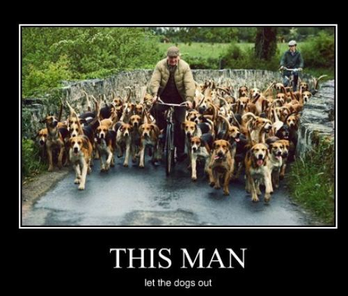 This man Funny Dogs with Man on Bicyle Picture