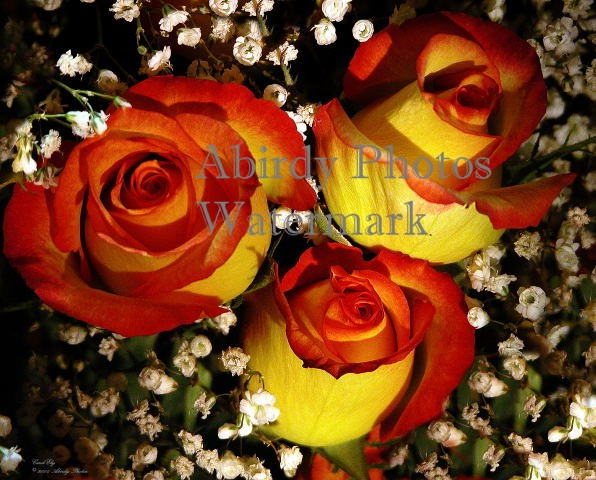 Three Yellow Roses In Bouquet