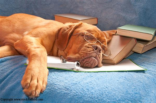 Funny Dog Fedup with the Books