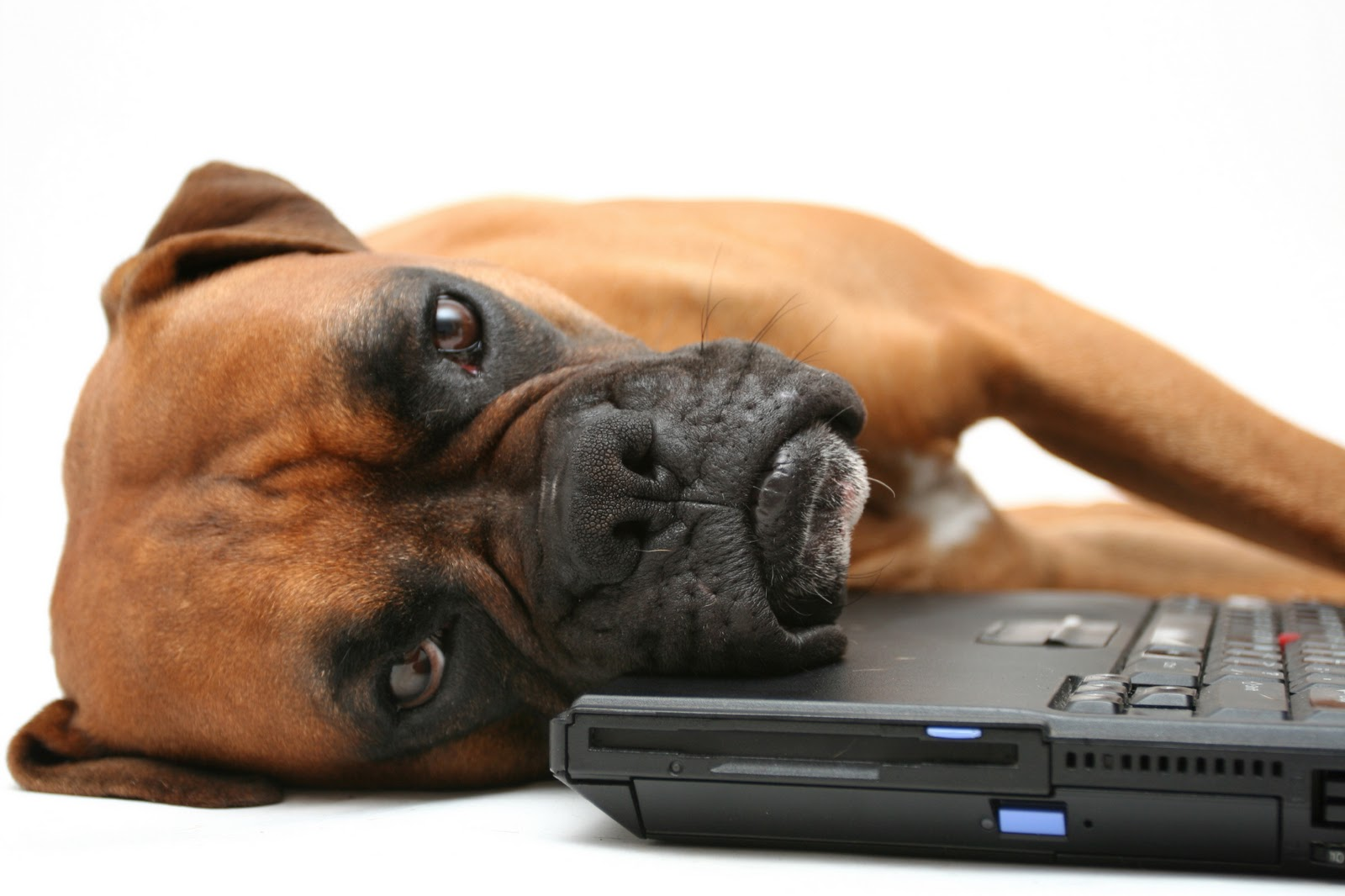 Funny Dog With Laptop Picture