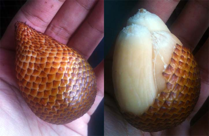 Today I ate a snake fruit. It tasted like pineapples Funny Fruit Picture