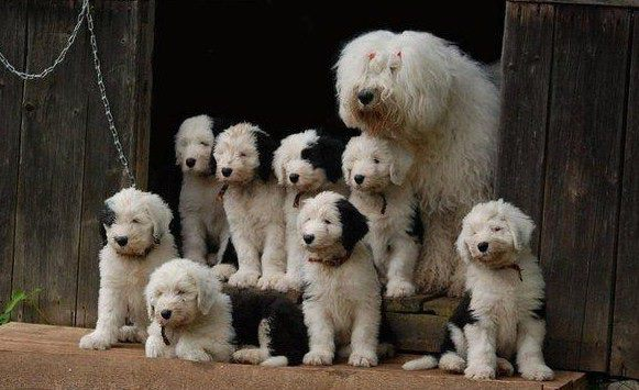 Took forever. 8 puppies. Family portrait. Funny Dog Image