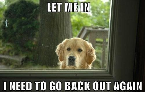 Troll Dog Funny Dog Image