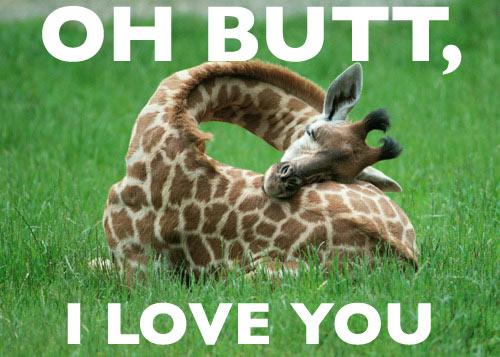 True love Funny Giraffe Foto