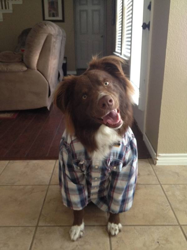 I give you Farmer Chewbacca! Funny Brown Dog Picture