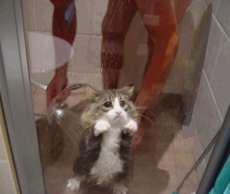 Wet cat is NOT happy Funny Cat Picture