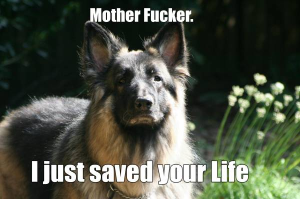 I Just Saved Your Life Funny Dog Picture