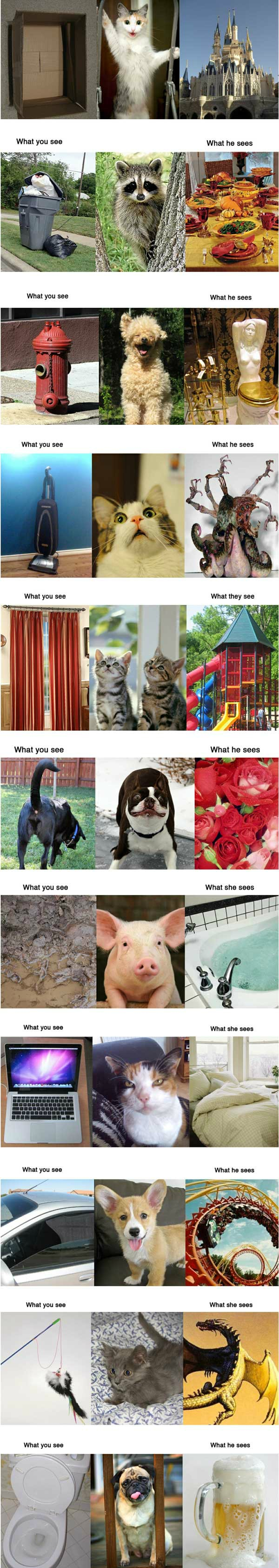 What you see vs. Funny picture