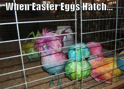 When Easter eggs hatch Funny Animal Picture