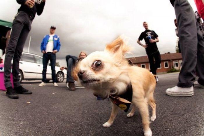 I'm loco Funny Dog Image