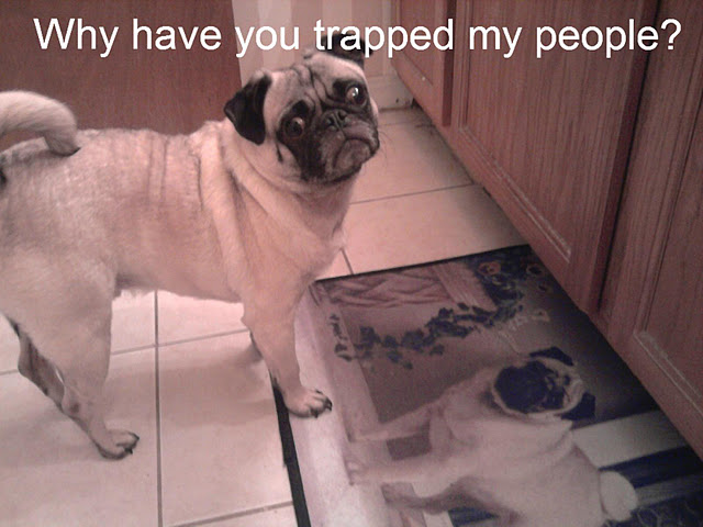 Why have you Trapped My People ? Funny Dog Image