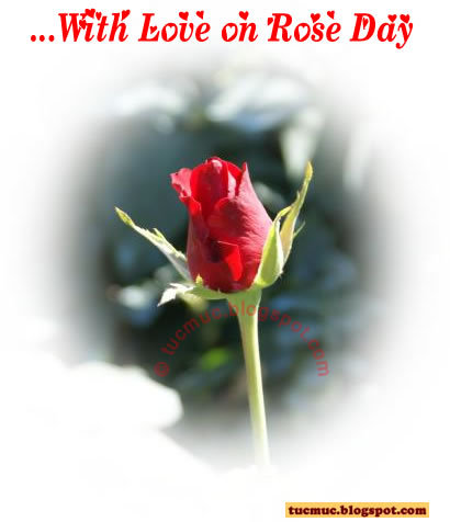 With Love on Rose Day