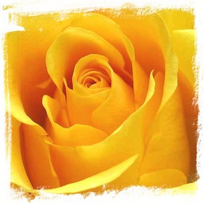 Yellow Rose Image for Hi5