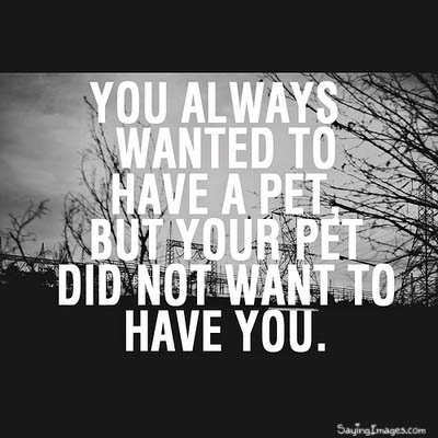 You always wanted to have a pet Funny Quote Picture