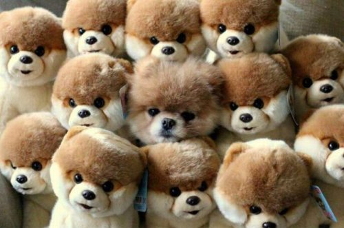 You can't find me.. Funny Dog Picture