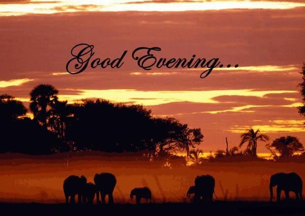 Good Evening Pictures Images Graphics Comments Scraps 40